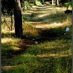 דרכי ההליכה בשמורת הטבע - צילום: אפי אליאן