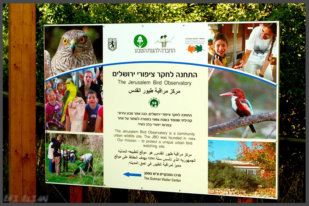 מידע אודות התחנה לחקר ציפורי ירושלים - צילום: אפי אליאן