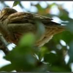 ציפור מקננת בתחנה לחקר ציפורי ירושלים - צילום: אפי אליאן