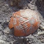 שרידי כדים מיני מאות שנמצאו בקרקעית הבוצה של הנמל