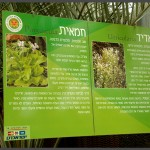 מידע אודות צמחים טורפים בגן אוטופיה