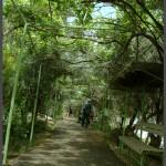 אחד מהשבילים המוצלים בפארק אוטופיה
