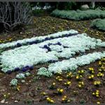 מרבד פרחים בצורת דגל ישראל
