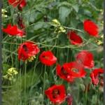 פרחים בגינות הפארק