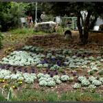 מרבדי פרחים ברחבי פארק אוטופיה