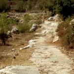 דרכי המעבר לאורך הטארסות של הסטף