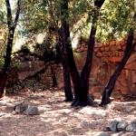 שרידי הכנסייה הביזנטית וחורשת האלונים העתיקה