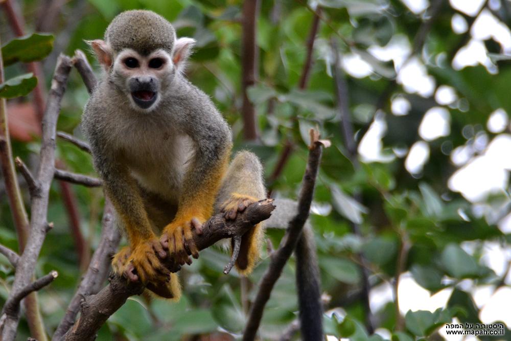 קופיף זעיר עם מבט די חייזרי