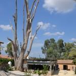 מבנה נפחיית אשבל המשוחזר במזכרת בתיה