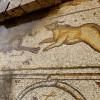 דוב רץ אחרי כלב - פסיפס הציפורים קיסריה - צילום: אפי אליאן