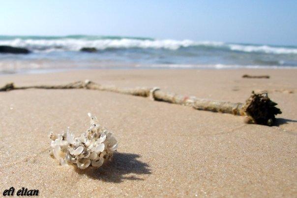 חוף ניצנים בשפלת החוף הדרומית - צילום: אפי אליאן