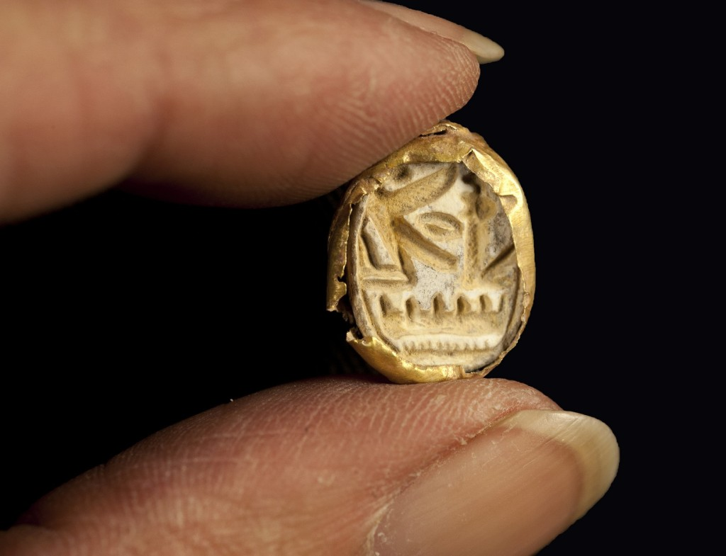 חרפושית הזהב. צילום: קלרה עמית, באדיבות רשות העתיקות