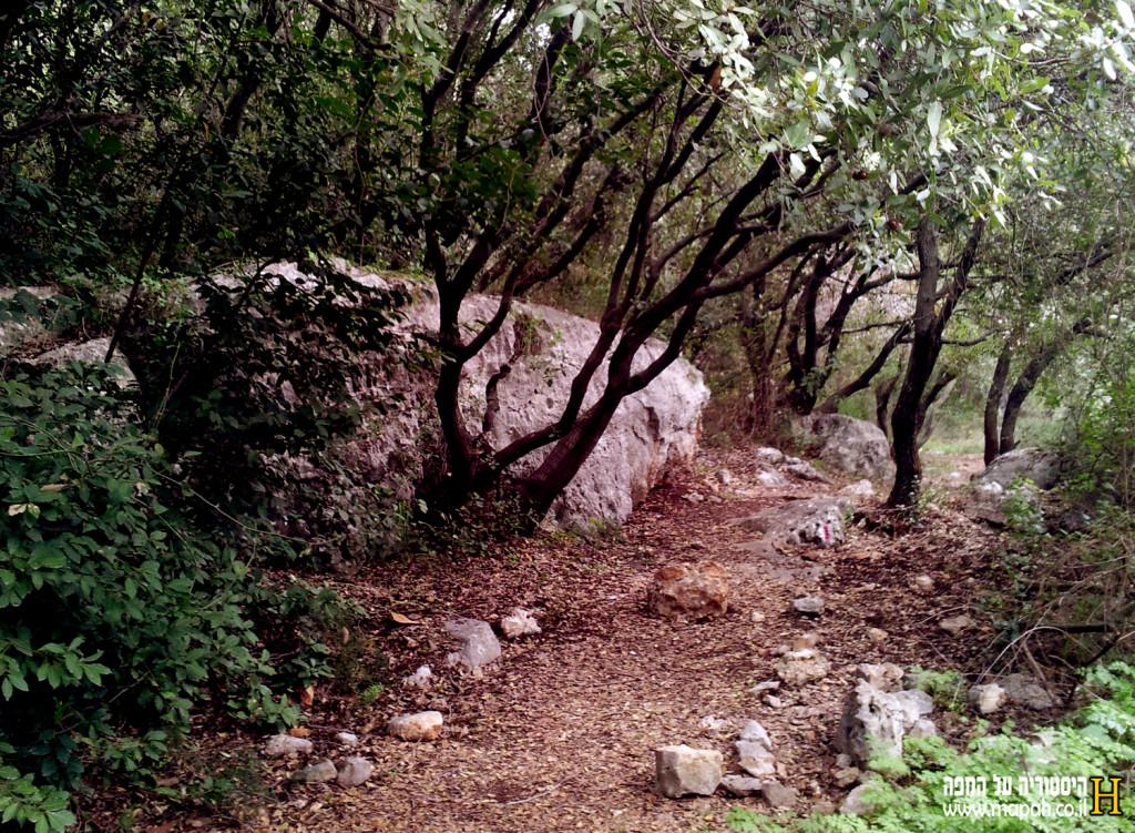 """חורבת דנעילה - השביל נסלל על ידי אנשי קק""""ל לטובת המבקרים במקום - צילום: אפי אליאן"""