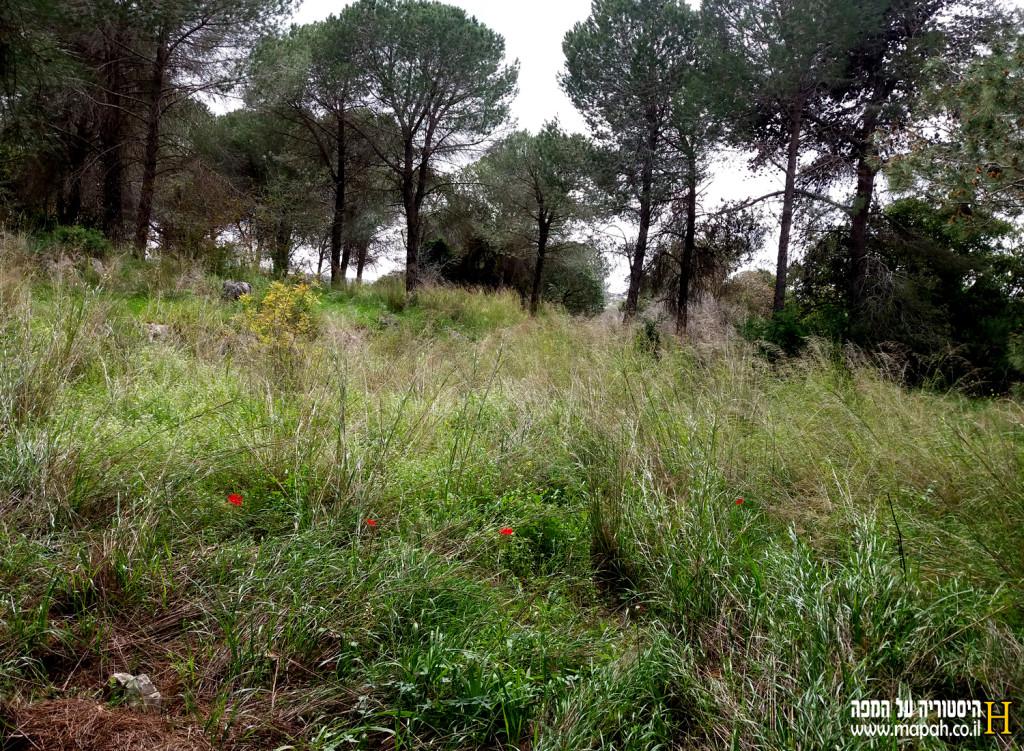 צמחייה בסביבת שביל הטיול - צילום: מורן יונה